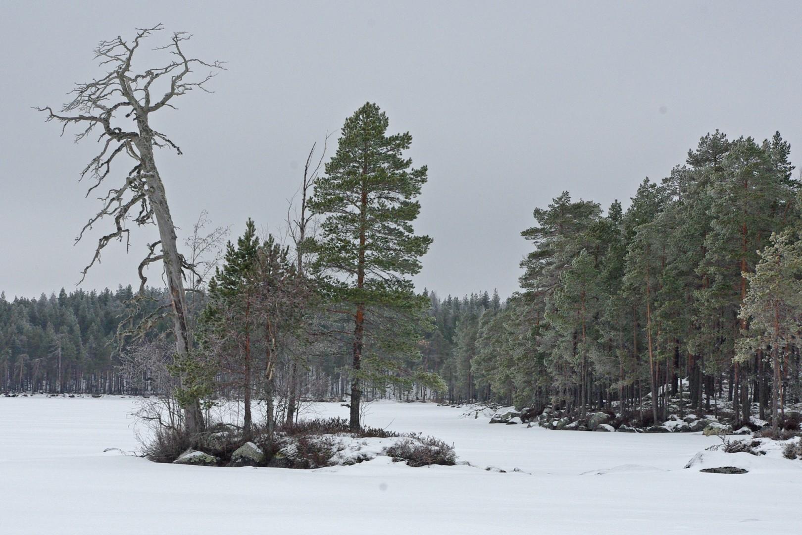 Talvipäivänä Koirajärvellä